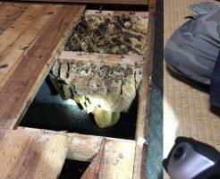 杵築市山香町立石で床下の蜂の巣の駆除 施工事例紹介