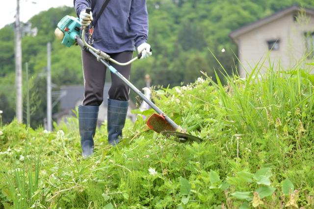 大分市で草刈りに最適な年3回の時期~楽に草刈りを終えるコツまで徹底解説